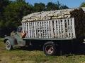 firewood_header